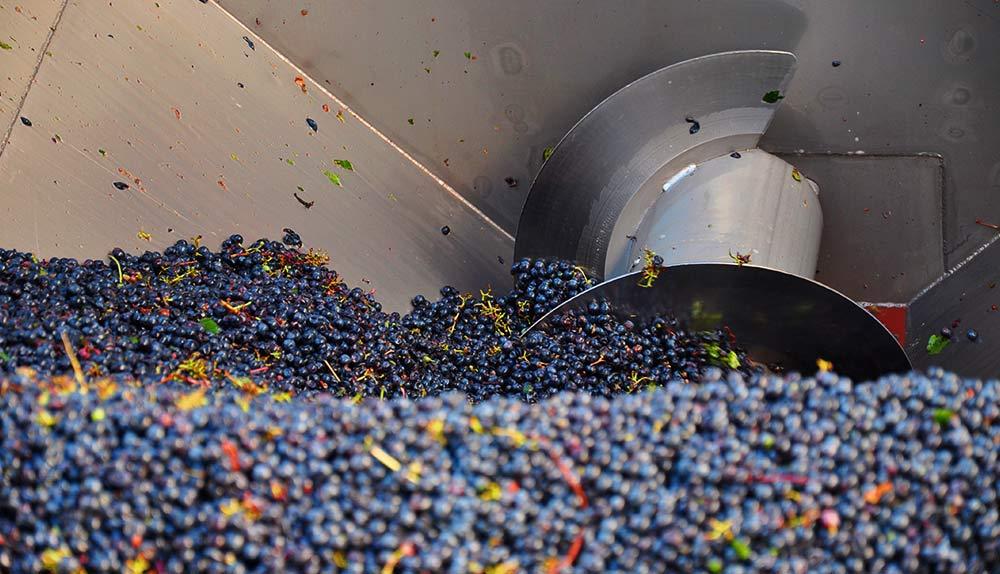 despalillado y estrujado de la uva